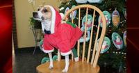 071220_charlie_brown_dog_2